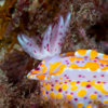 20160224_nudibranch_00012