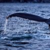 20150121_whales_00029